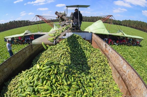 Áttérés az új agrárpolitikára az EU-ban: fókuszban a gazdák és az élelmiszerbiztonság